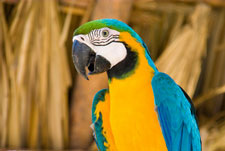 belize_zoo